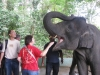 Feeding-the-friendly-elephants